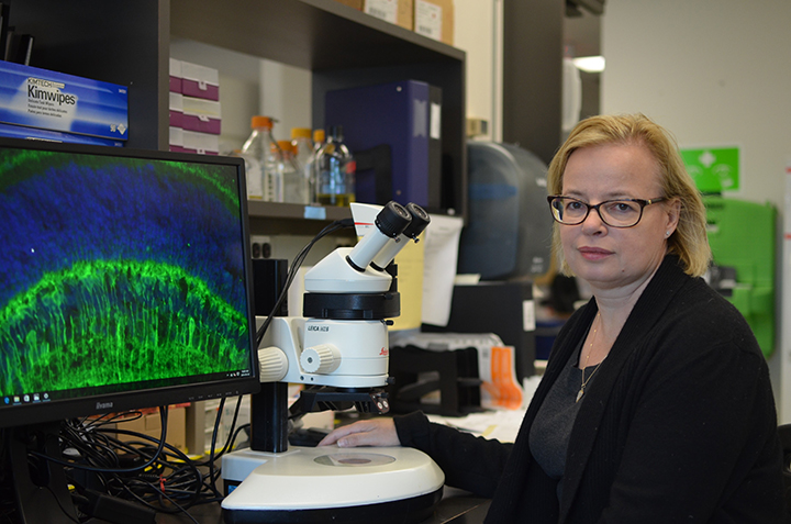 Carol Schuurmans sits at a microscope in her lab.