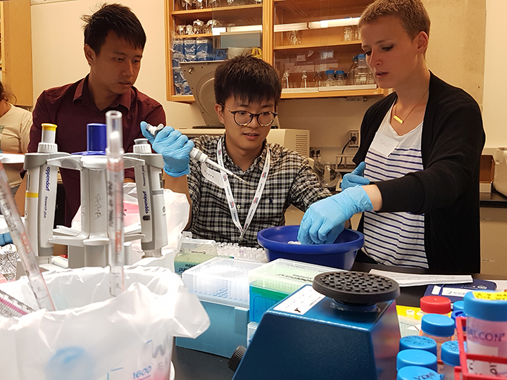 Two PhD students perform lab work under the guidance of a post-doctoral fellow in Keith Pardee's laboratory.