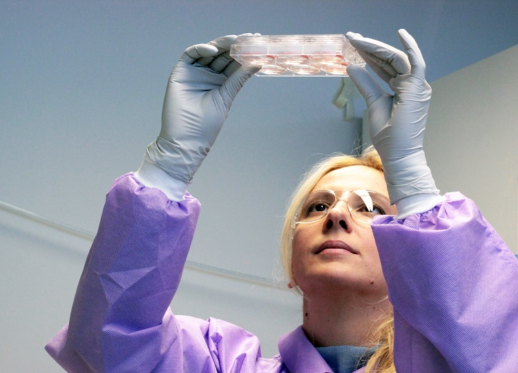 Scientific associate Jelena Tomic looks up at a plate of cells.