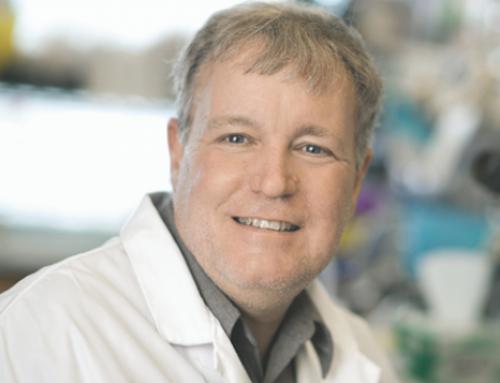 Growing mini-organs to study brain development and disease